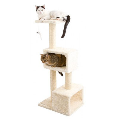 Kaķu nagu asināmais Capella